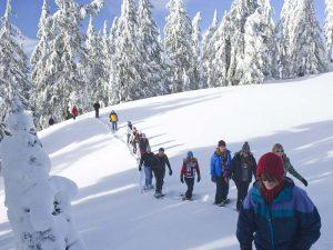 Teamevent Schneeschuhwanderung: Gruppe geht durch verschneiten Winterwald